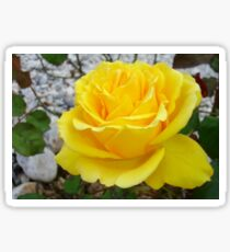 Beautiful Yellow Rose with Natural Garden Background Sticker
