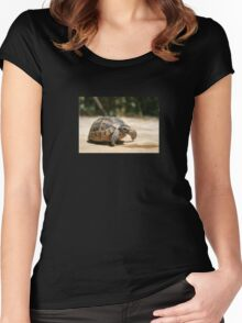 Portrait of a Young Wild Tortoise Women's Fitted Scoop T-Shirt