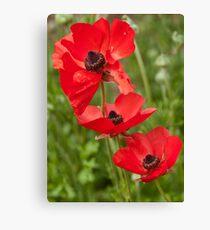 Flanders Poppies Canvas Print
