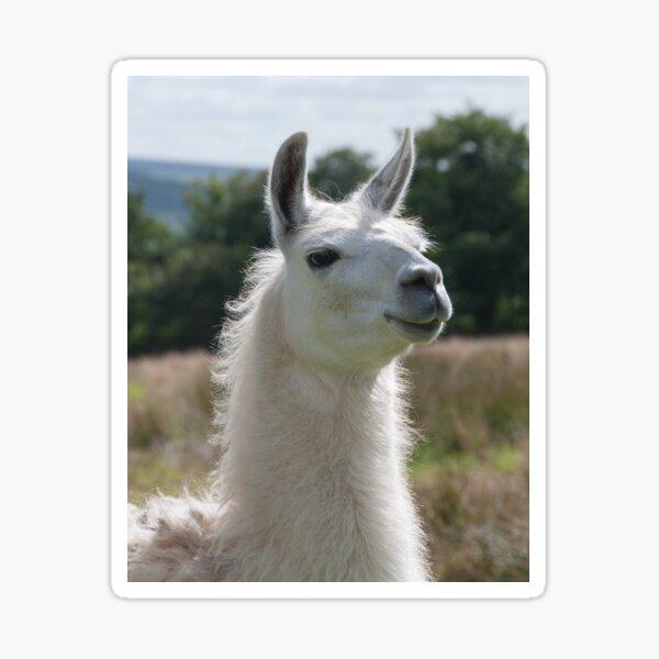 Loki the llama Sticker