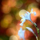 Spring lights... by Mary Trebilco