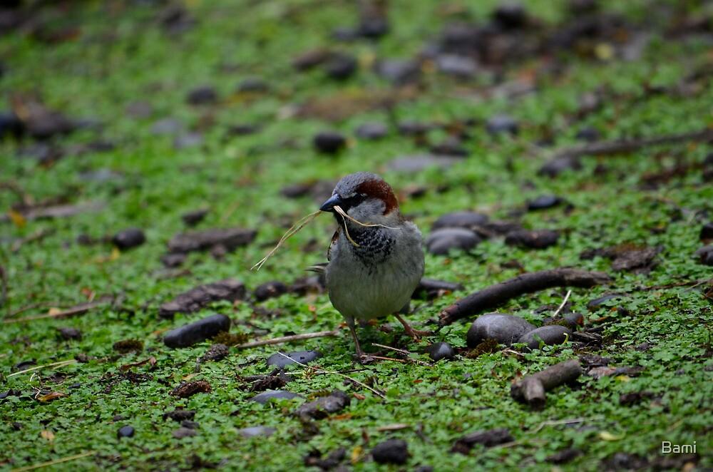 Little Sparrow by Bami