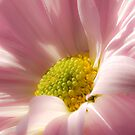 Pink by michelsoucy