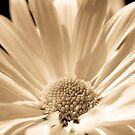 Monotone floral by michelsoucy