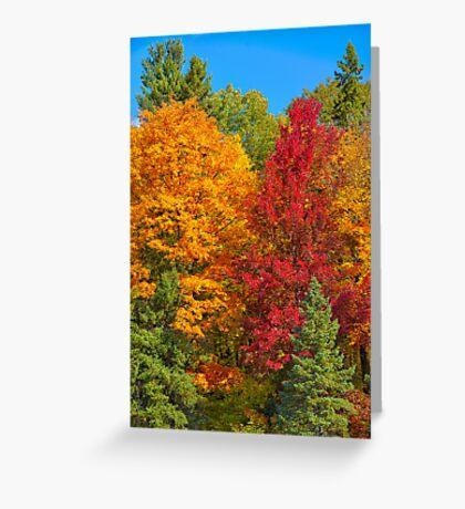 Gatineau Park Colourburst Greeting Card