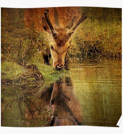 Deer Oh deer, do I look that old? Poster