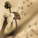 Monotone Stamen by michelsoucy