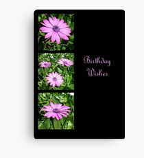 Birthday Wishes Greeting with Pink Daisies Canvas Print