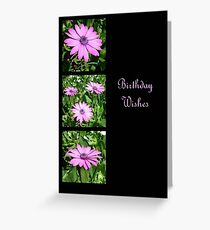 Birthday Wishes Greeting with Pink Daisies Greeting Card