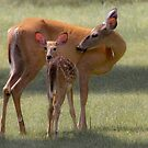 Doe with Fawn by michelsoucy