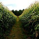 McNab Corn Maze - Cedar by rsangsterkelly