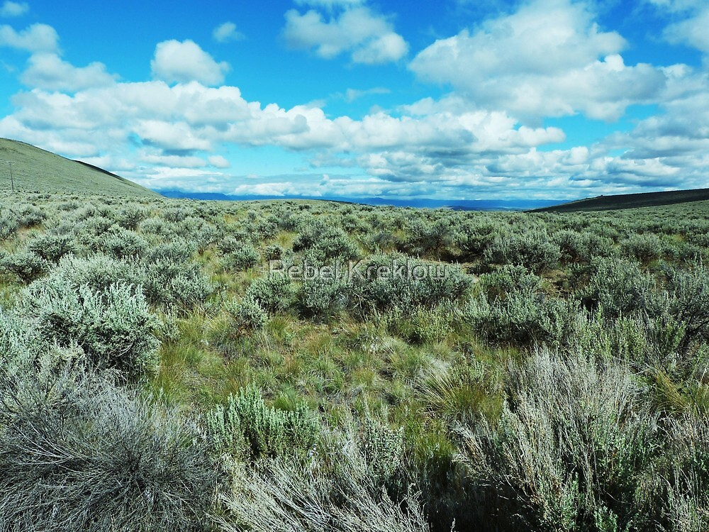 High Desert Spring - Baker County, OR by Rebel Kreklow