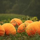 Pumpkin Patch by Kelly Chiara