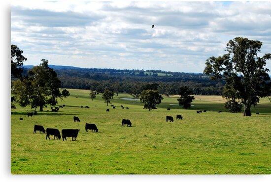 Rural Landscape by Lozzar Landscape