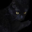 Suki, Scaring Away the Evil Spirits on Halloween Night! by Heather Friedman