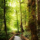 Rainforest Skywalk by Joel McDonald