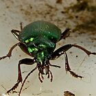 Beetle Stare down by Rick Playle