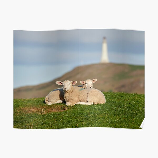 Lambs and Hoad Monument Poster