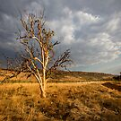 Keep  River National Park NT by David Haworth