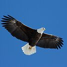 Bald Eagle in flight by michelsoucy