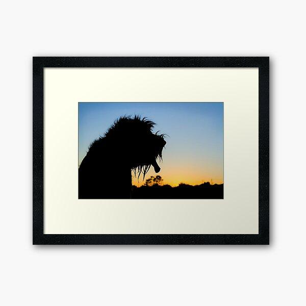 Silhouette Spinone Framed Art Print