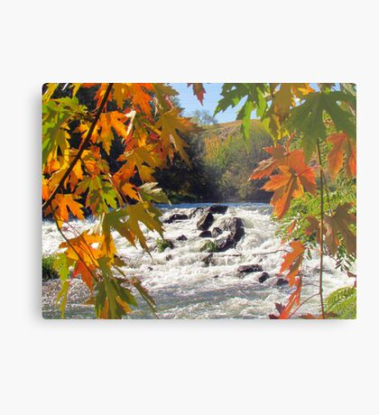 Autumn ~ Mother Nature at Her Finest  Metal Print