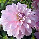 A dahlia in pastel by bubblehex08