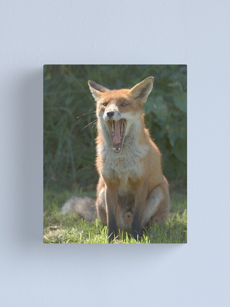 Alternate view of Toothy fox Canvas Print