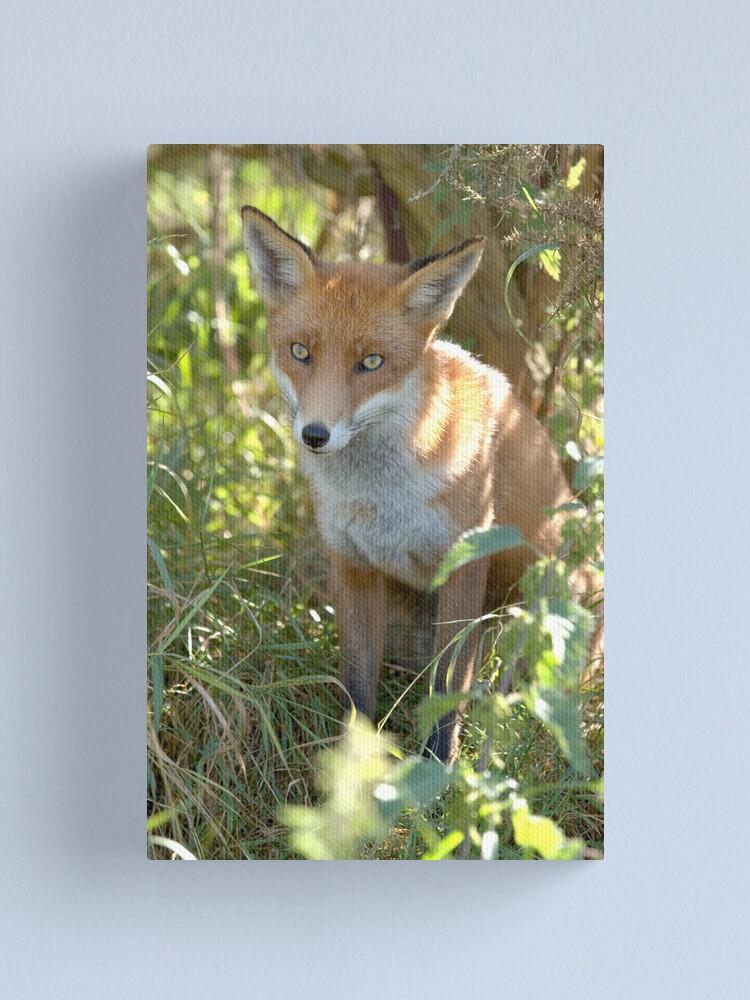 Alternate view of Demure fox Canvas Print