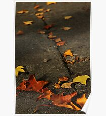 Leaves on a Cracked Pavement Poster