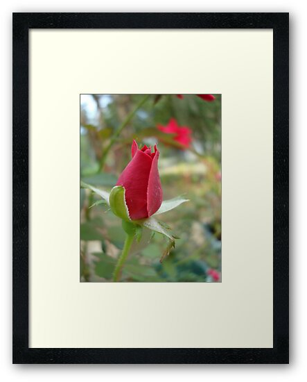 LITTLE RED ROSEBUD by May Lattanzio