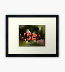Black and Orange Butterfly Framed Print