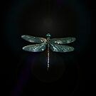 Dragonfly 1 by Marvin Hayes