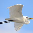 Egret Zoomed right by me by TJ Baccari Photography