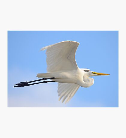 Egret Zoomed right by me Photographic Print