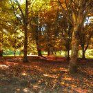 Autumn by MartinMuir