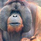 Orangutan by Perggals© - Stacey Turner