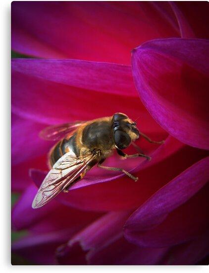 Honey Bee by Jamie Lee
