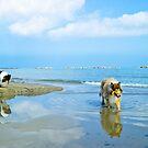 Dogs Street by BellatrixBlack