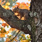 I'm feeling a bit nutty and squirrely! by vigor