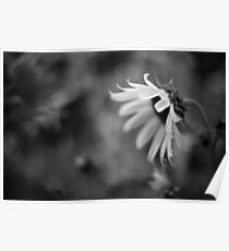 The Loneliest Flower Poster