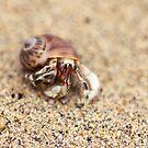 Big Crab Eyes by iltby