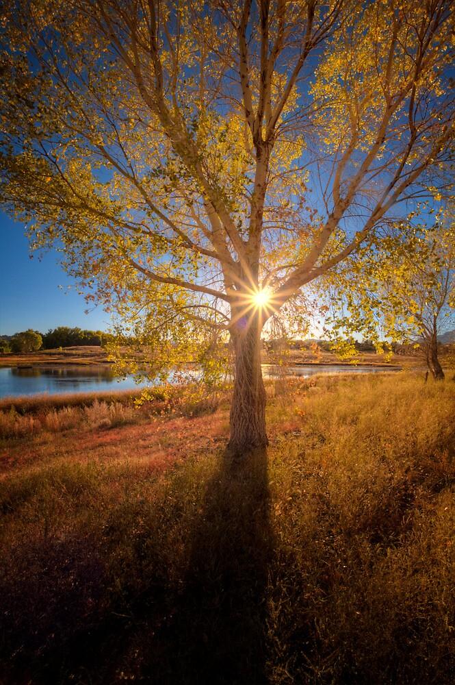 Autumn Peek by Bob Larson
