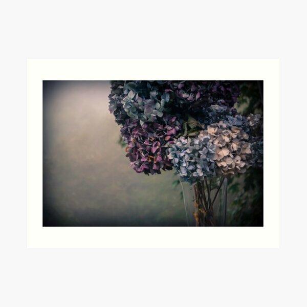 Hydrangea in the Fall Art Print