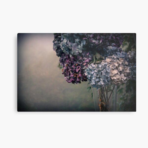 Hydrangea in the Fall Metal Print