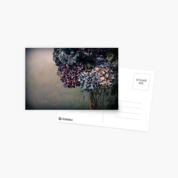 Hydrangea in the Fall Postcard
