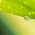 Shades Of Green by iltby