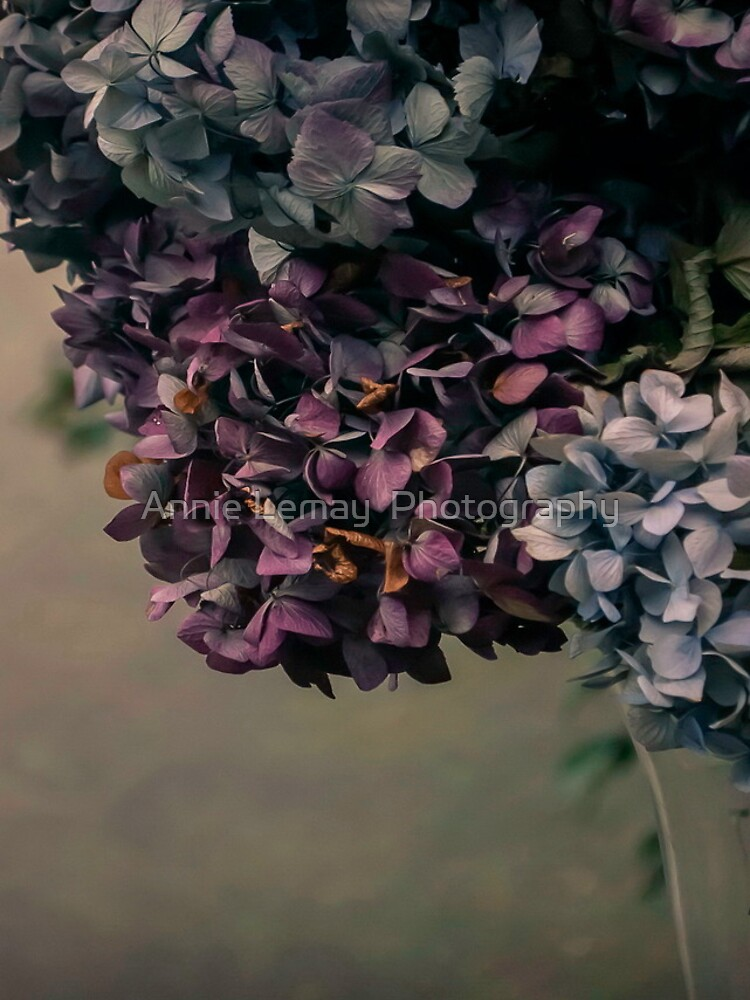 Hydrangea in the Fall by ajlphotography