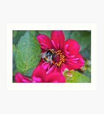 Bee Happy! Art Print