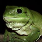 Tree Frog by William Arnold
